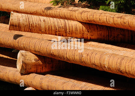 bruce stem, wood, forestry - Stock Photo