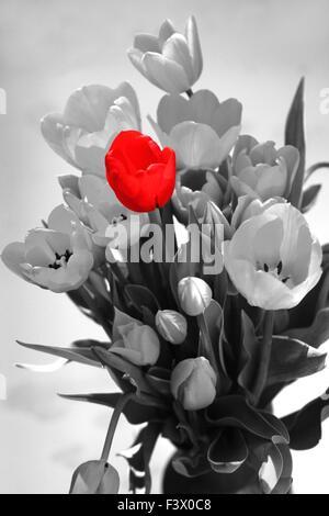red tulip - Stock Photo