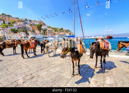 Donkeys at the port of the Greek island, Hydra. They are the only means of transport on the island, no cars are - Stock Photo