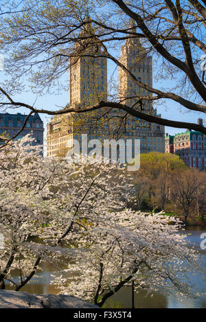 Spring in Central Park with blooming Yoshino Cherry trees. Upper West Side Manhattan, New York City. USA - Stock Photo