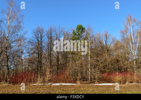 Early spring in the forest - Stock Photo