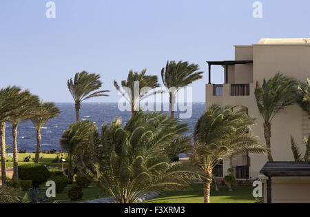palms on sea in egypt with green space - Stock Photo