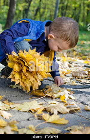 Cute little boy collecting autumn leaves - Stock Photo