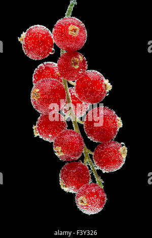 red currants on a black background - Stock Photo