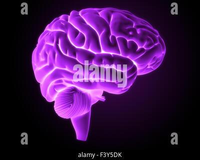 3d rendered illustration - brain - Stock Photo