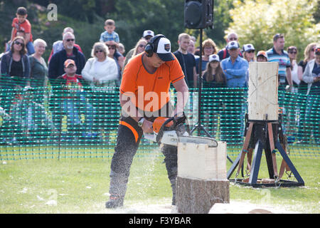 British lumberjacks show of their skills with STIHL German manufacturer of chainsaws exhibition at RHS Wisley, Surrey, - Stock Photo