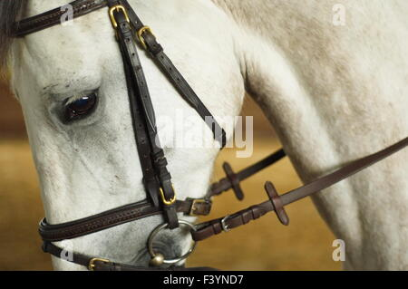Horse head with bridle. Close up of the eye - Stock Photo