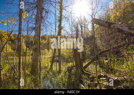 Jungle primeval forest in swamp of Plitvice - Stock Photo