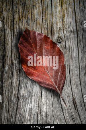 Autumn Leaf On Wooden Background - Stock Photo