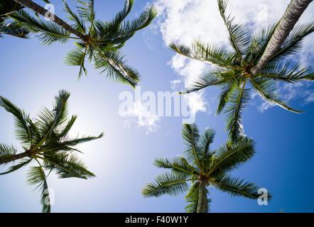 Graphic upward view of Palm Trees, Kaua'i Marriott Resort; Kalapaki Bay, Kaua'i, Hawaii, USA - Stock Photo