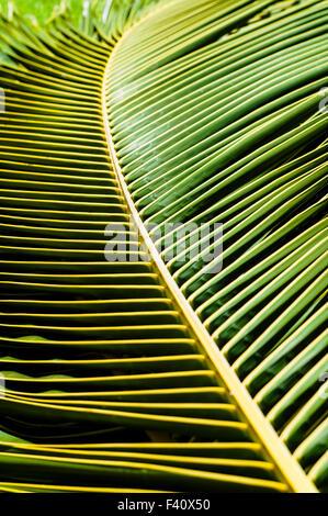 Graphic abstract view of Palm fronds, Kaua'i Marriott Resort; Kalapaki Bay, Kaua'i, Hawaii, USA - Stock Photo