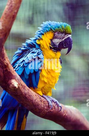 Colorful parrot, Hawai'i Tropical Botanical Garden Nature Preserve; Big Island, Hawaii, USA - Stock Photo