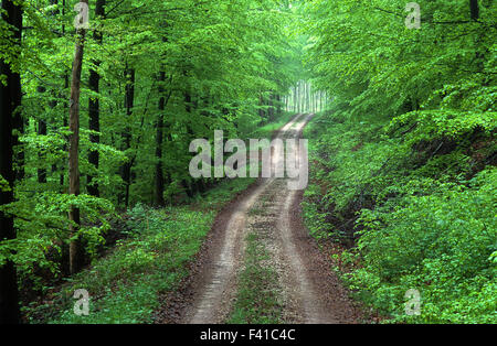 forest road; way; spring; - Stock Photo