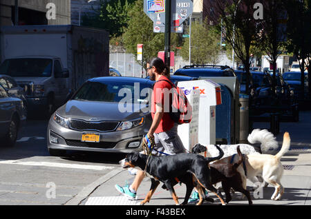 dog walker with dogs in brooklyn nyc - Stock Photo