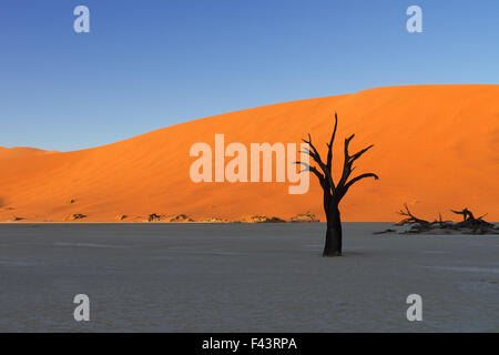 Sunrise in Deadvlei illuminating the red sand dunes while the floor and the dead trees are still in the shadows - Stock Photo