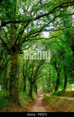 The woods outside of Palas de Rey on the Way of Saint James (Camino de Santiago),Galicia, Spain - Stock Photo