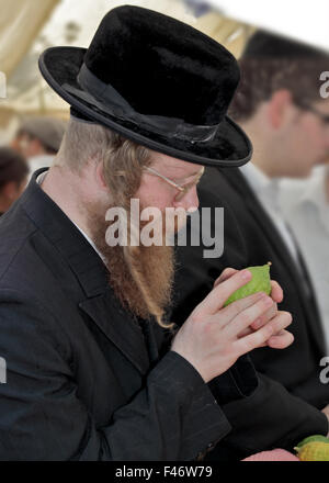 Religious Jew with  beard - Stock Photo