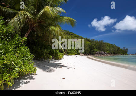 Dreamlike white sand beach with palm trees, Port Launay Marine National Park, Mahe Island, Seychelles - Stock Photo