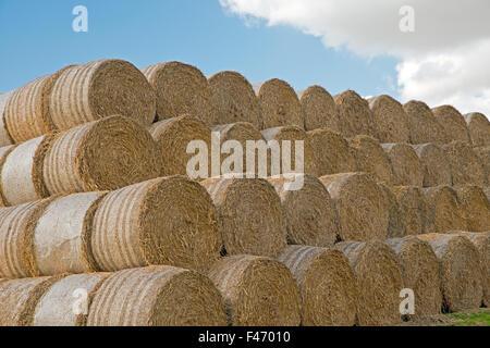 stacked round Hay bales United Kingdom - Stock Photo