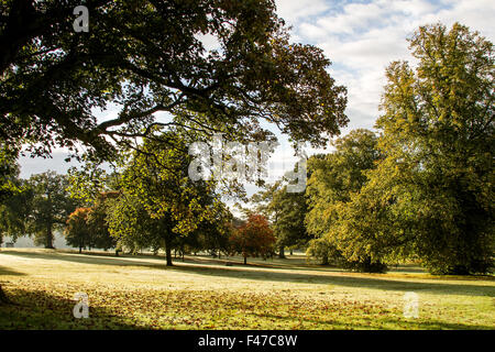 Dundee, Tayside, Scotland, UK, 15th October 2015. UK Weather: A cold and frosty autumn morning sunshine in Camperdown - Stock Photo