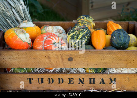 Pumpkin and Gourd display at the Malvern Autumn Show, Worcestershire, UK - Stock Photo