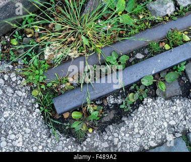 Weeds growing around a disused railway line on waste ground in Trafford Park industrial estate, Manchester, England. - Stock Photo