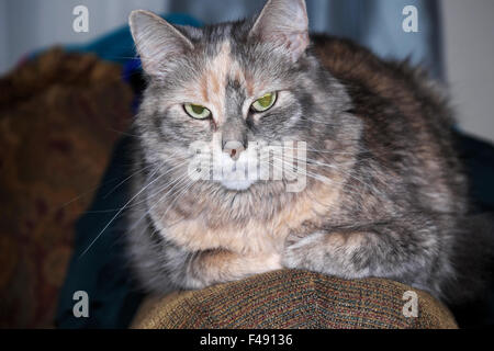 A child's pet cat, called 'Crabby Cat.' - Stock Photo
