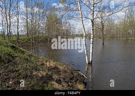 Trees submerged in flood water - Stock Photo