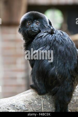 Animal in the zoo in Dortmund. - Stock Photo