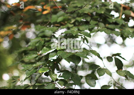 Green leaves at eye level. - Stock Photo