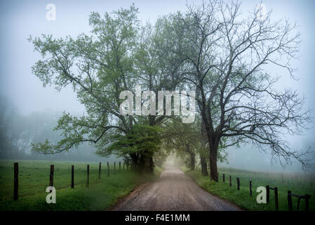 A foggy morning along Sparks Lane in Cade's Cove, Great Smoky Mountains National Park, Tennessee, USA. - Stock Photo
