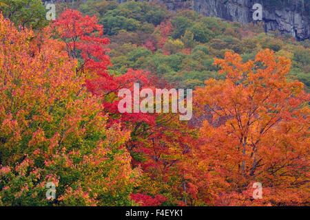 Autumn at Bemis Falls Trail, Crawford Notch State Park, New Hampshire, USA. - Stock Photo