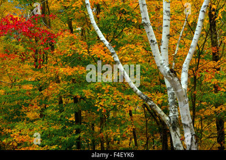 Autumn at Ripley Falls Trail, Crawford Notch State Park, New Hampshire, USA. - Stock Photo