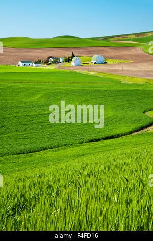 USA, Washington State, Palouse. Farm with fresh crop of winter wheat (PR). - Stock Photo