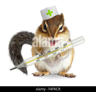 Funny animal chipmunk hold thermometer, veterinary concept - Stock Photo