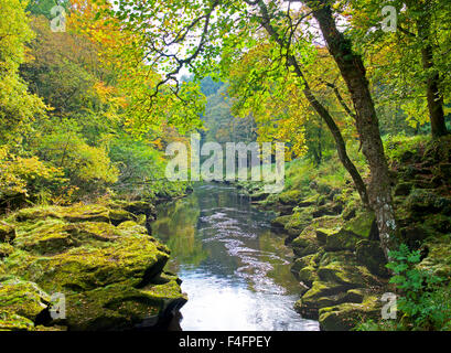 River Wharfe and Bolton Wood, Wharfedale, North Yorkshire, England UK - Stock Photo