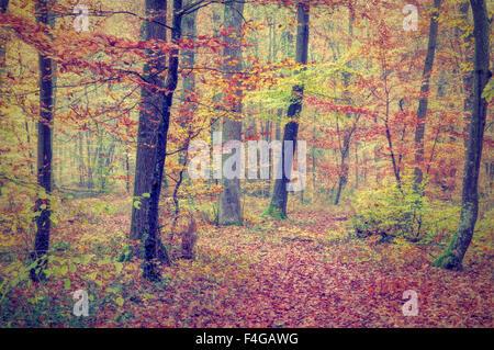 green orange yellow brown autumn forest background - Stock Photo
