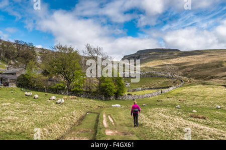 Ingleborough from Crina Bottoms - Stock Photo
