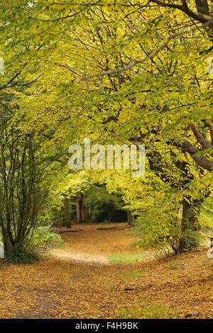 Hampstead, London, UK, 18 October 2015: Perfect autumn colours on sunny Hampstead Heath. Credit:  David Bleeker - Stock Photo