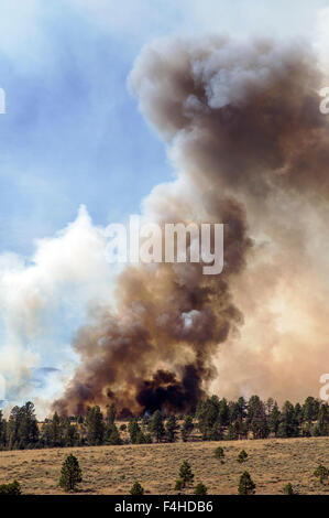 US Forest Service; controlled fire burn near Mt. Shavano; Chaffee County; central Colorado; USA - Stock Photo