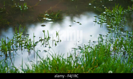 Still surface of puddle in flooded grass, reflecting sky. - Stock Photo