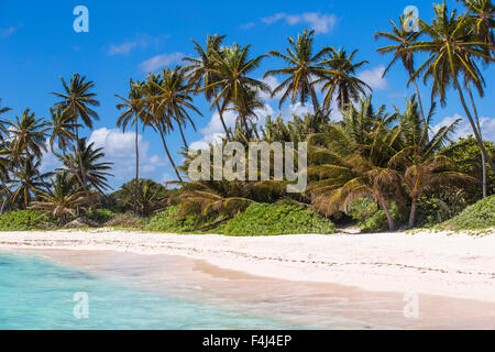 Playa Blanca, Punta Cana, Dominican Republic, West Indies, Caribbean, Central America - Stock Photo