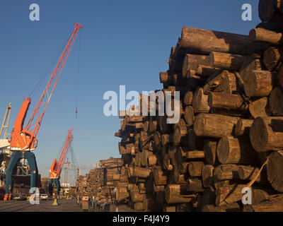 Timber loaded for export at the harbour in Montevideo, Uruguay, South America - Stock Photo