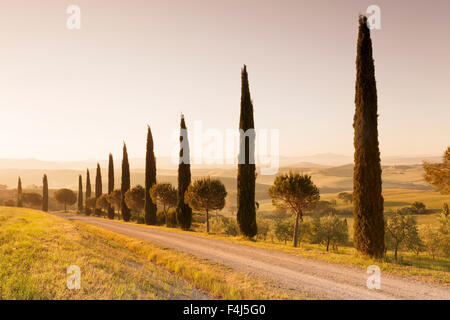 Alley of cypress trees at sunrise, near San Quirico, Val d'Orcia (Orcia Valley), UNESCO, Siena Province, Tuscany, - Stock Photo