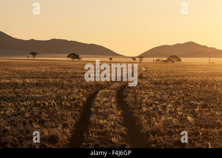 Track at sunset in the Namib Desert, Namibia, Africa - Stock Photo