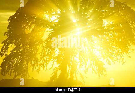 Scandinavia, Sweden, Dalarna, View of sun shining behind birch tree - Stock Photo