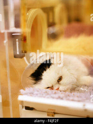 Cat on operating table - Stock Photo