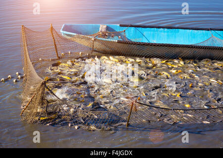 Workers With Nets At Fish Farm Stock Photo Royalty Free Image 41453011 Alamy