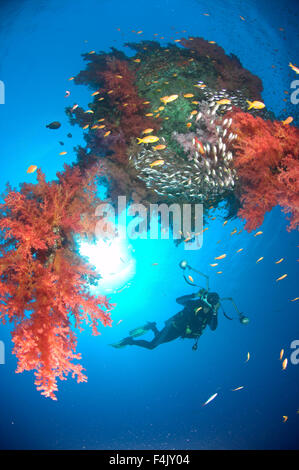 Diver on sunken shipping buoy - Stock Photo