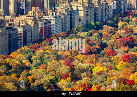 Aerial view of brilliant fall colors of Central Park West foliage in late afternoon. Upper West Side, Manhattan, - Stock Photo